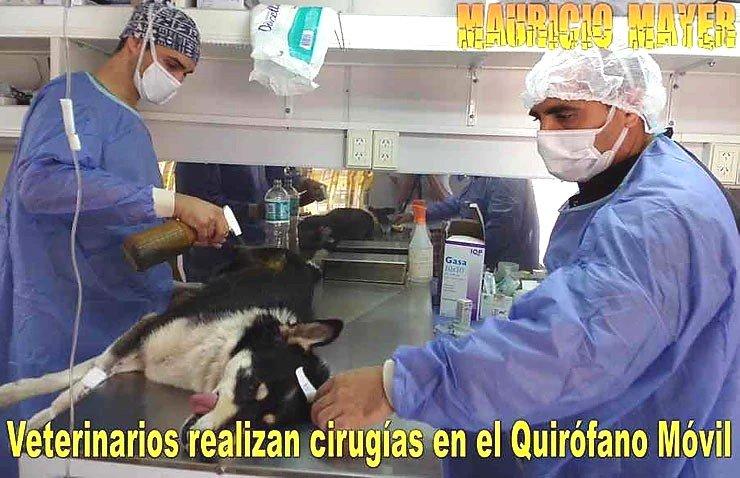 Nueva jornada de castraciones gratuitas a perros y gatos