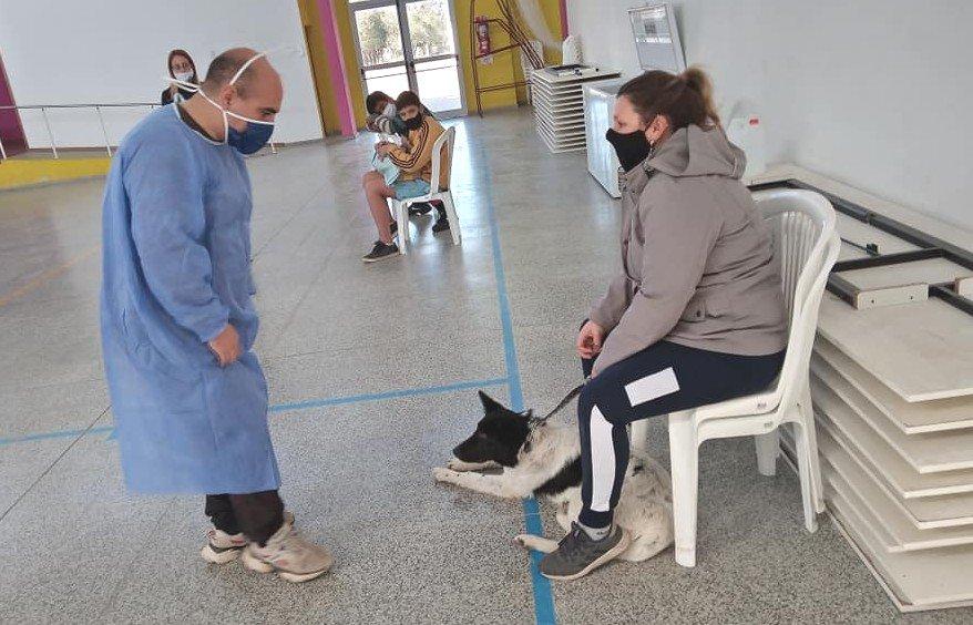 Nueva jornada de castración de mascotas